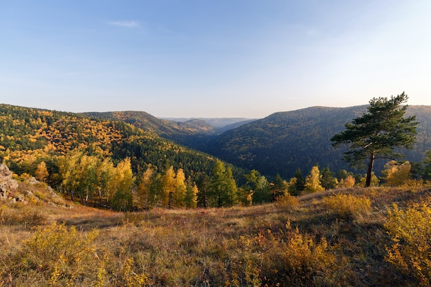 Autumn landscape in golden colors bright sunlight yellow foliage trees on the slopes of the mount