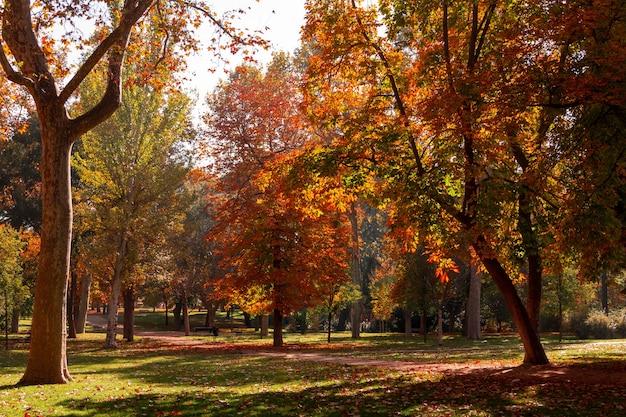 황금 잎이 있는 나무가 있는 공원의 가을 풍경.