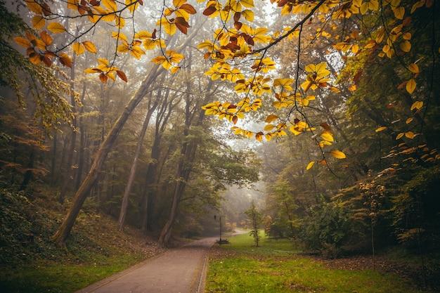 Осенний пейзаж утром в парке