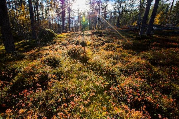 Осенний пейзаж в национальном парке юлляс палластунтури, лапландия, финляндия