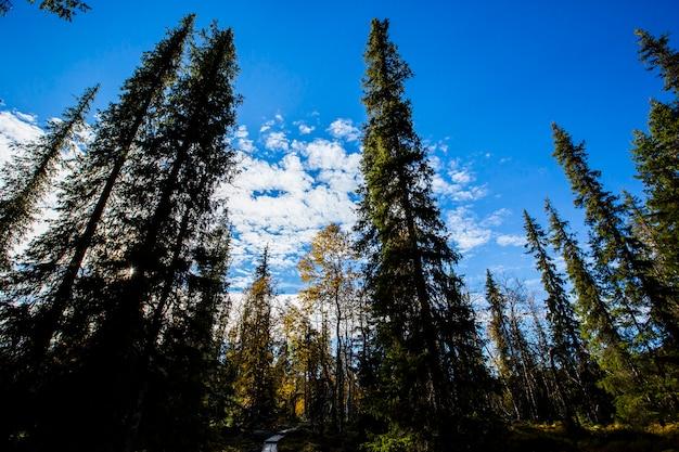 Yllas pallastunturi国立公園、ラップランド、フィンランドの秋の風景