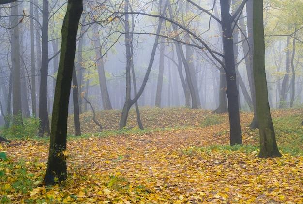 Осенний пейзаж, утренние желтые и зеленые листья с туманом