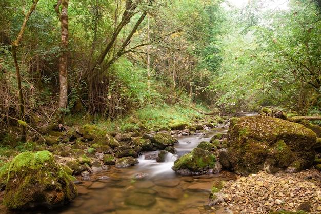 緑の森を流れる霧深い山川の秋の風景
