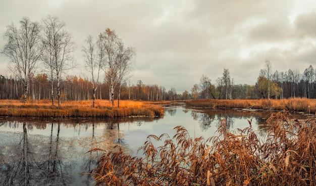 오래 된 연못, 나무, 반사와 비오는 날에가 풍경. 러시아.