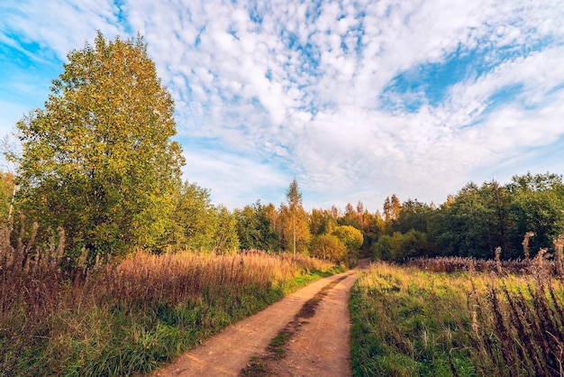 Осенний пейзаж в солнечный день. полевая дорога уходящая вдаль.