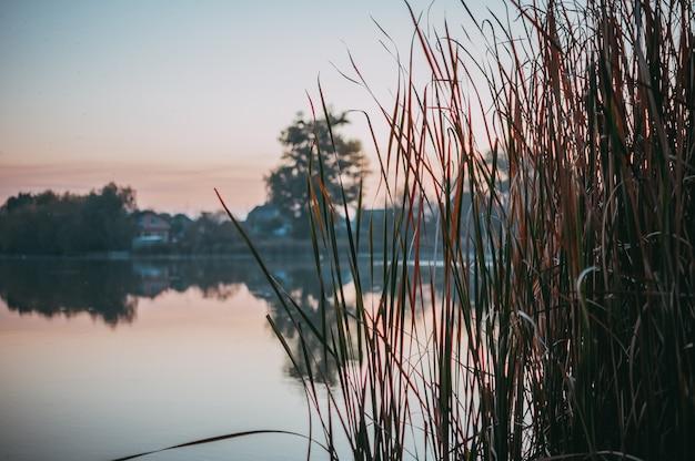 Осенний пейзаж на озере. сельское небо реки природы заволакивает ландшафт и сухие желтые тростники. берег природы. сельский речной пейзаж.