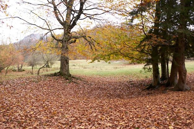 Autumn landscape park forest fallen leaves tall trees fresh