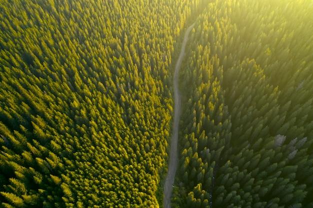 秋の風景、山の森の舗装道路。黄色と赤のキャストツリーと緑の針葉樹が絵のようなコントラストを作り出しています。