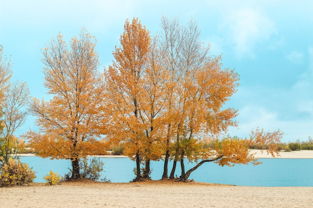 Autumn landscape over the river, yellowed trees along the beach.