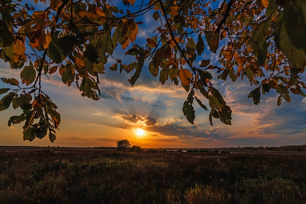 Autumn landscape through the branches of a tree on the field with a sunset