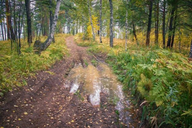 숲 웅덩이와 낙엽을 통과하는 황금빛 단풍이 있는 가을 풍경 나무
