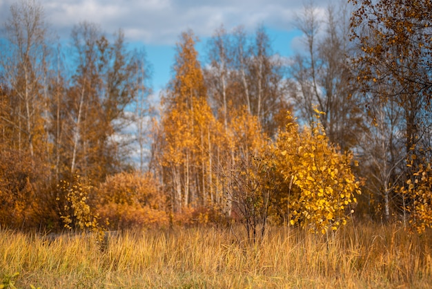 Autumn landscape. village houses are reflected in the river lake, like gingerbread. evening sun, sunset. colorful trees yellow, red, purple shades. blue sky with light clouds. russia, siberia, perm