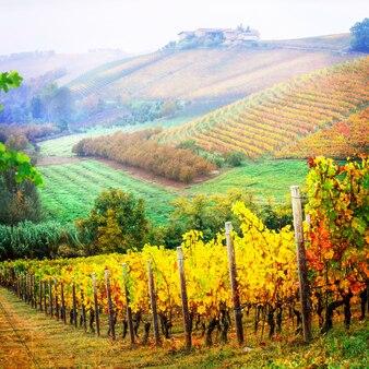秋の風景。黄金色のブドウ園、イタリアのピエモンテのブドウ畑