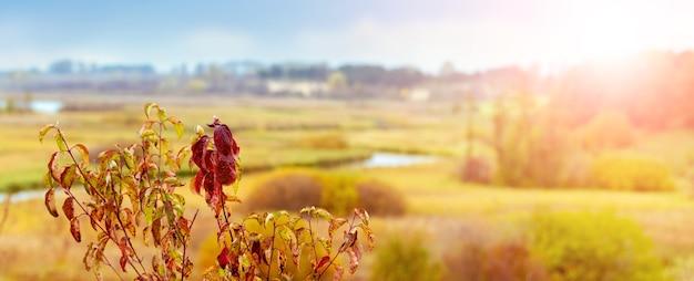 広い平野、曲がりくねった川、夕方の太陽の明るい光の中で前景に色とりどりの木の葉がある秋の風景