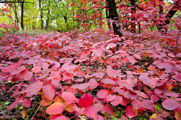 Autumn landscape with beautiful colored trees