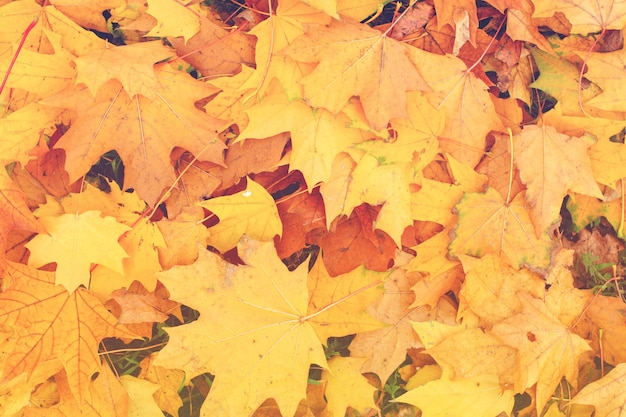 Autumn landscape with bright colorful leaves. fall leaves background. top view.