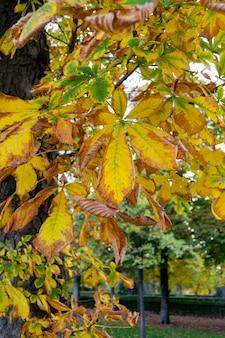 スペイン、マドリッドのジャルダンデルレティーロの木から茶色、オレンジ、緑、乾燥した木の葉が落ちようとしている秋の風景