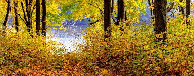 明るい日差しの中で川のそばの色とりどりの木々と秋の風景