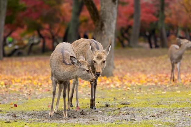 鹿と秋の風景