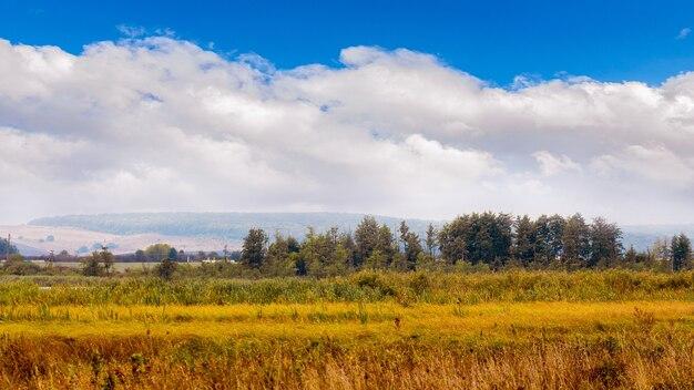野原に乾いた草、遠くの木々、白い雲と青い空の秋の風景