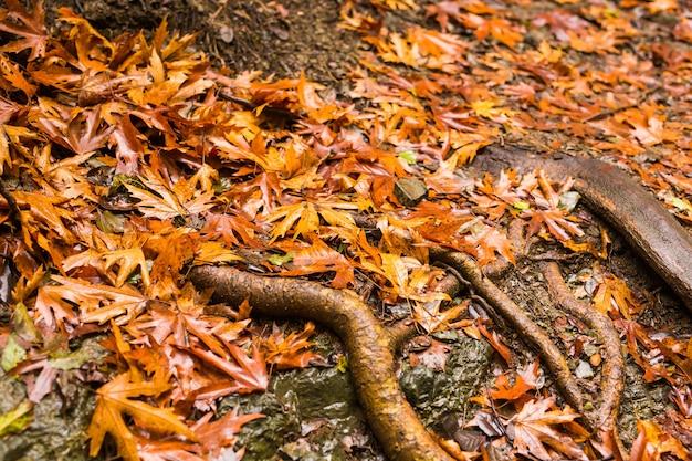 낙엽과 나무 뿌리가있는 가을 풍경 프리미엄 사진