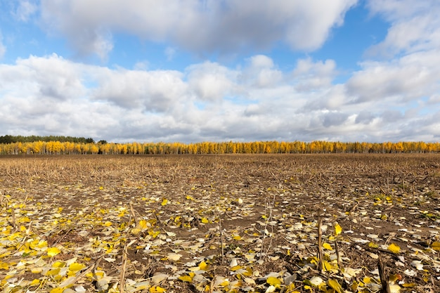 Осенний пейзаж с опавшей листвой и желтолистными деревьями в лесу вдалеке