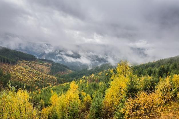 숲과 높은 산에 구름 이을 풍경