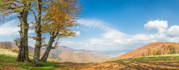 산, 파노라마에에서 황금 나무와가 풍경