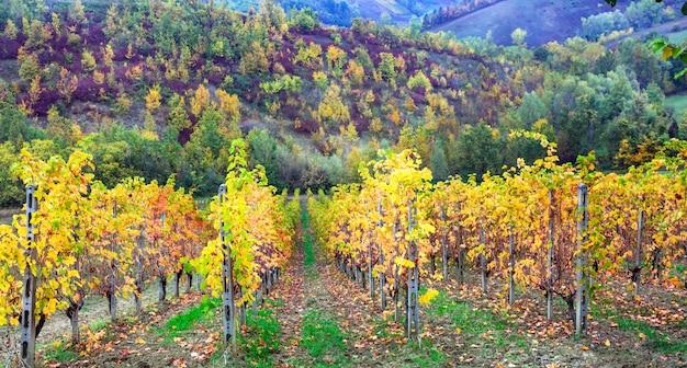 Осенний пейзаж с золотыми виноградниками.