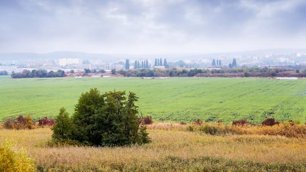 緑のフィールドと秋の風景。街を背景に冬小麦の緑の芽のある畑。