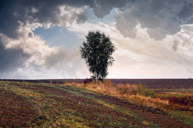 Autumn landscape with a lone tree in a field and a stormy cloudy sky