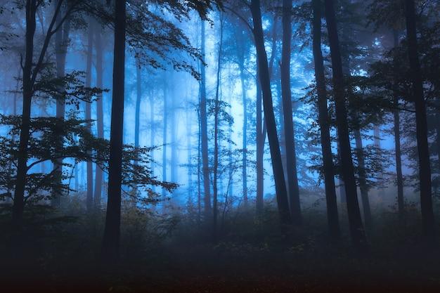 神秘的な霧のおとぎ話の森と秋の風景。