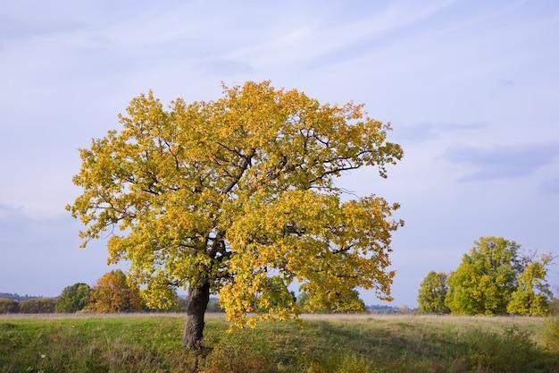 Paesaggio autunnale con quercia