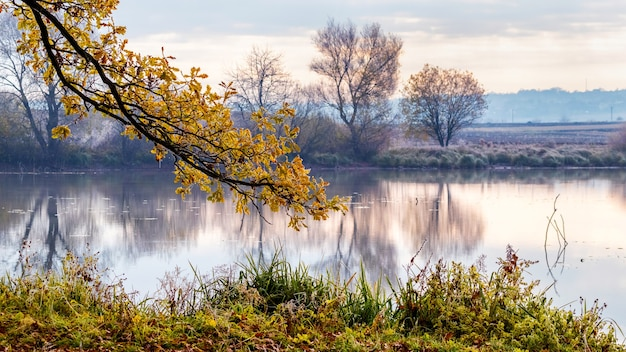 Осенний пейзаж с рекой утром на рассвете. ветка с желтыми осенними листьями на реке