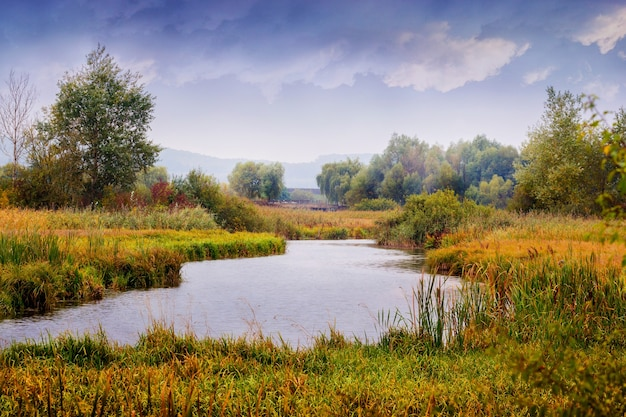 川、海岸の木々や葦の茂みと曇り空の秋の風景