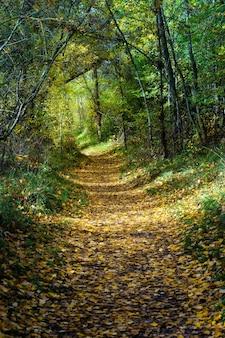 Осенний пейзаж с солнцем спереди и сзади, листьями на земле, деревьями и тропой к горизонту.