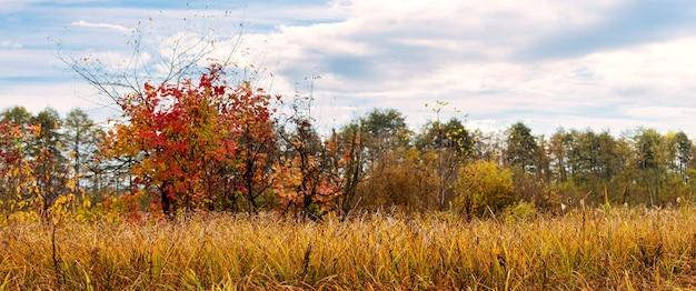 晴れた日に草の茂みと色とりどりの木々のある秋の風景