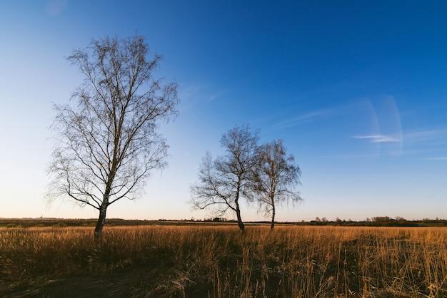 Осенний пейзаж с тремя березами с опавшими листьями