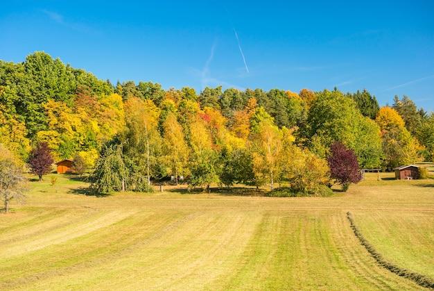 黄色と赤の木々と青い空と秋の風景。田舎