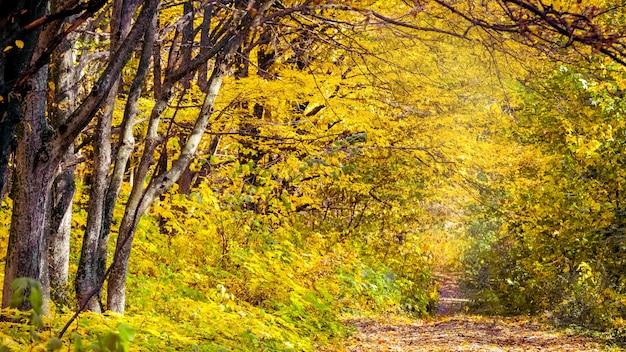 森の中の黄色い金色の木々と葉で覆われた道路の秋の風景
