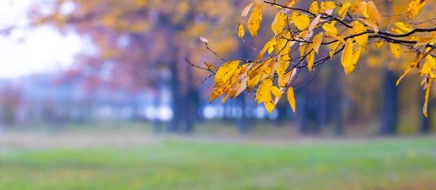 パノラマ、川の近くの森の木の枝に黄色の葉と秋の風景