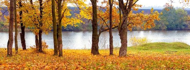 川沿いの黄色い木々と草の上に落ち葉、パノラマの秋の風景