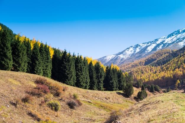 Осенний пейзаж. желтые и зеленые деревья. горы и ярко-голубое небо.