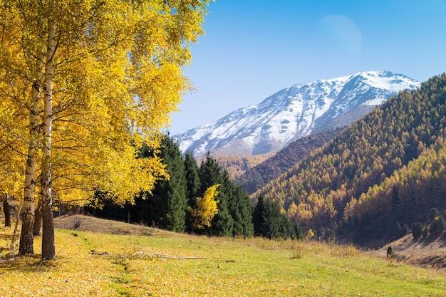 가을 풍경. 노란색과 녹색 나무. 산과 밝은 푸른 하늘.