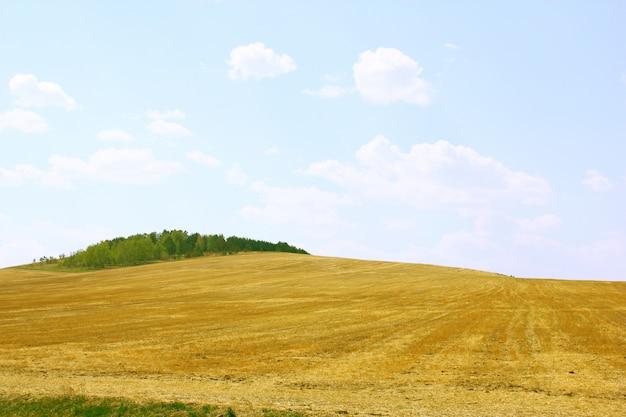 秋の風景です。黄色のフィールドと青い空。