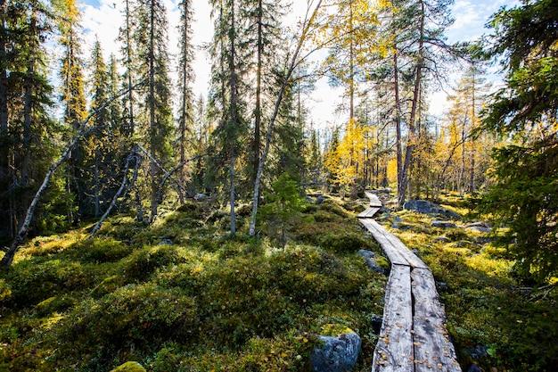 Autumn landscape in yllas pallastunturi national park, lapland, finland Premium Photo