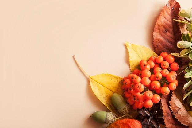 ベージュ色の背景に秋のレイアウト。黄緑色の葉、ナナカマド、ドングリ。コピースペース