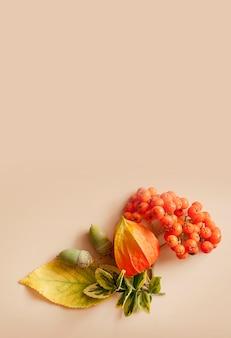 Осенний макет на бежевом фоне. листья желто-зеленые, рябина, желуди плоско лежат. осенняя композиция вид сверху. копировать пространство