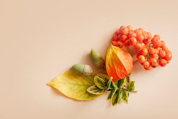 Осенний вид сверху макета на бежевом фоне с желто-зелеными листьями, рябиной, плоской планировкой желудей