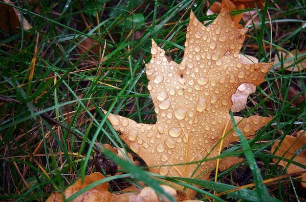 Осенний лист и капли. состав природы.